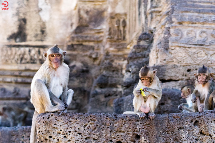 روز جهانی میمون