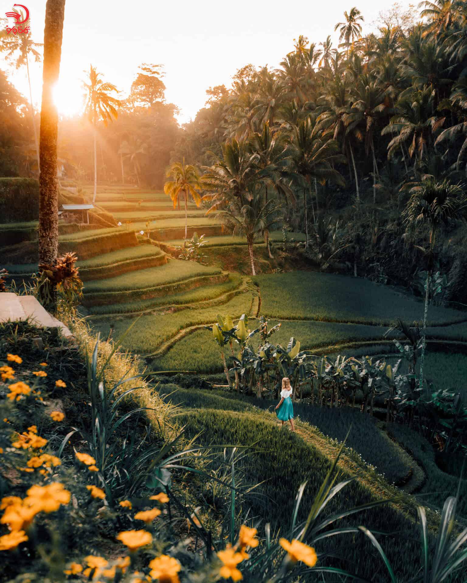 شالیزارهای پلکانی تگالالنگ بالی