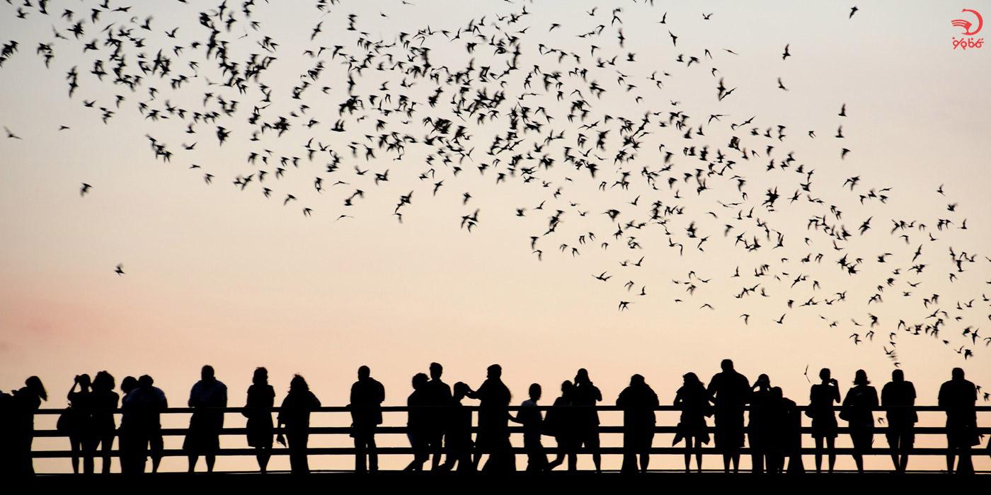 بهترین فصل مهاجرت خفاش ها به زامبیا