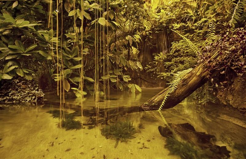 بخش جنگل های بارانی آمازون آکواریوم استانبول