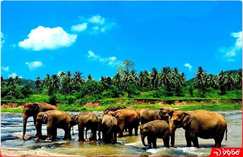 مرکز نگهداري فيل هاي پيناوالا