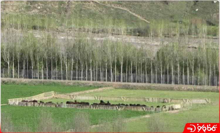 کشاورزی در روستای ایستا