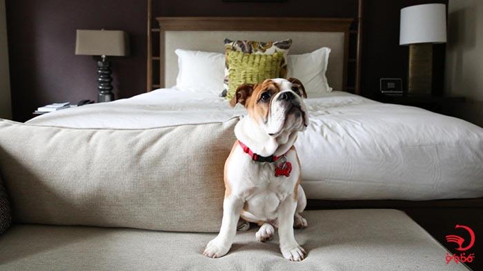 قوانین و مقررات هتل