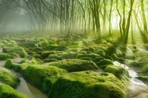 در 7 جنگل شگفت انگیز جهان قدم بزنید