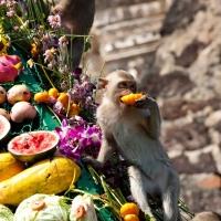 4 فستیوال میمون دیوانه وار در دنیا
