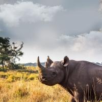 7 دلیل برای سفر به آفریقای جنوبی