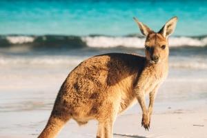 10 دلیل دیدنی برای سفر به استرالیا